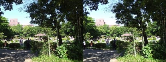 城北菖蒲園 庭園②(平行法)
