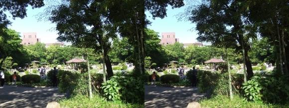 城北菖蒲園 庭園②(交差法)