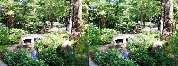 城北菖蒲園 庭園①(平行法)
