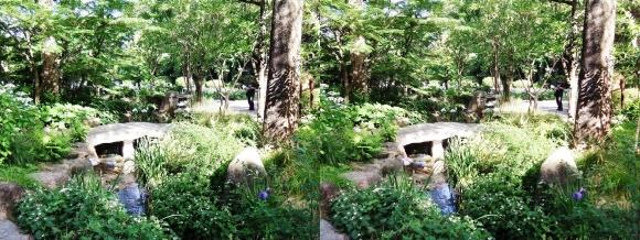 城北菖蒲園 庭園①(交差法)
