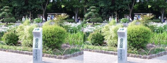 城北菖蒲園 「大阪みどりの百選」石碑(平行法)