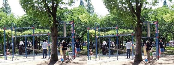 城北公園⑥(交差法)