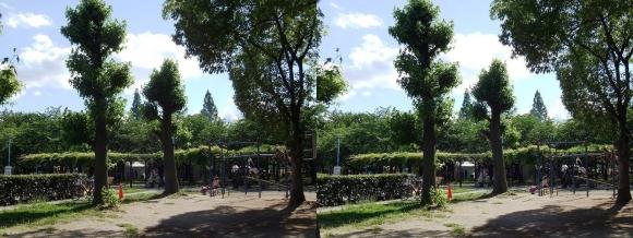 城北公園⑤(平行法)