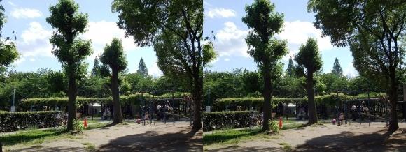 城北公園⑤(交差法)