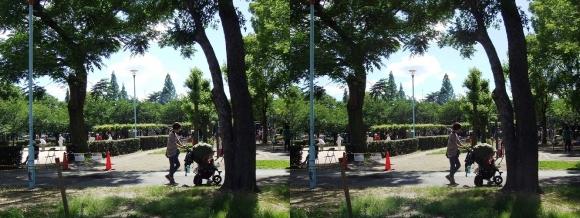 城北公園③(交差法)