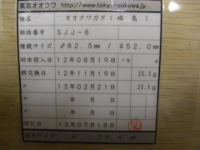 東京オオクワ12年SJJ(管理)
