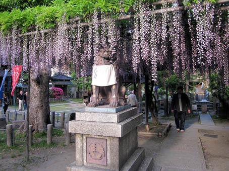 nodafuji5.jpg
