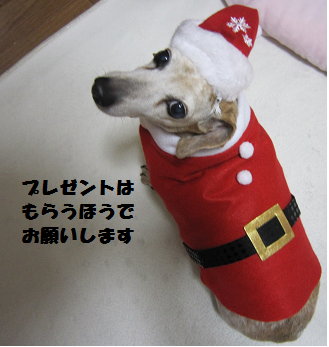 141224p4png.png