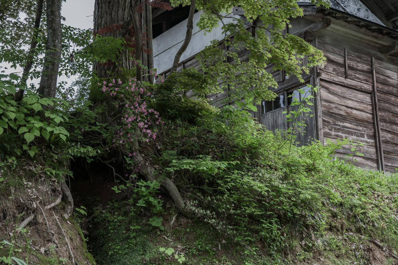 060530松之山 (2 - 1)-12