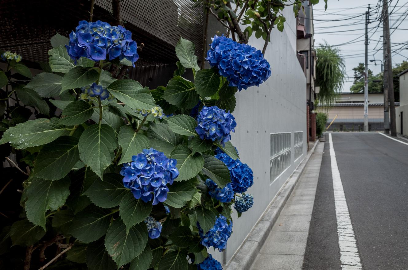 150602上野 (2 - 1)-22