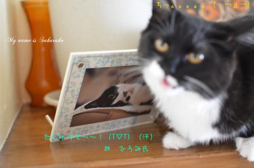 桜子ちゃん♪518