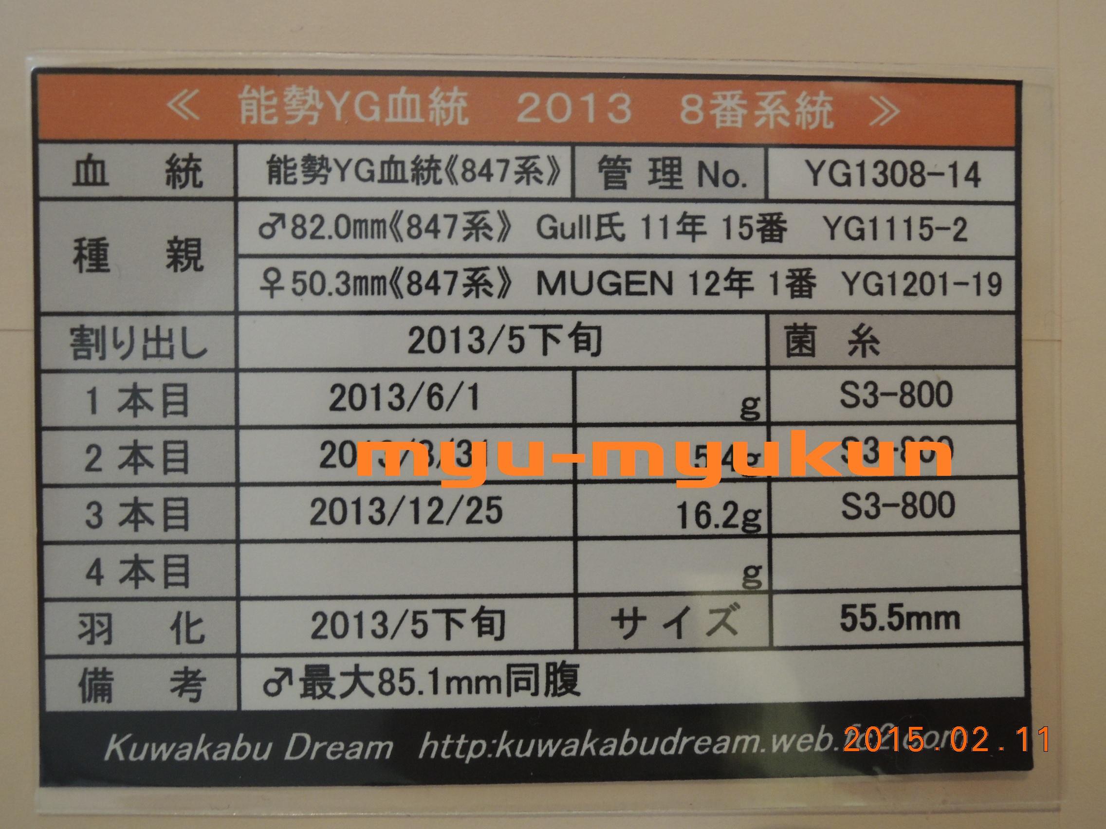 M1305♀8番管理表