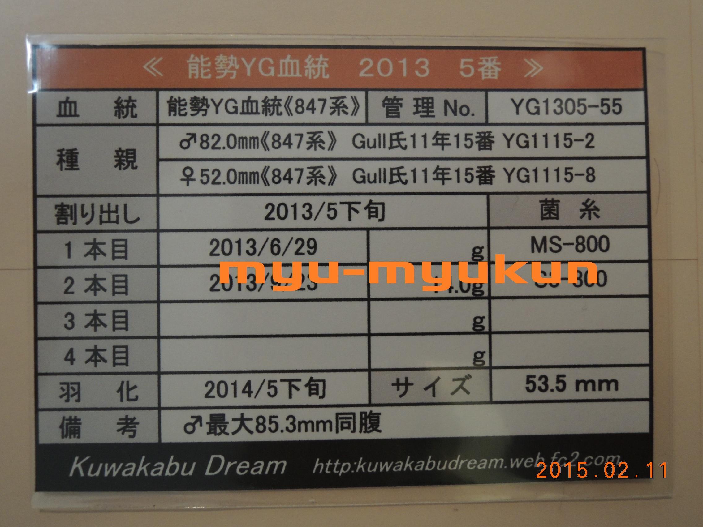 M1305-55♀管理表