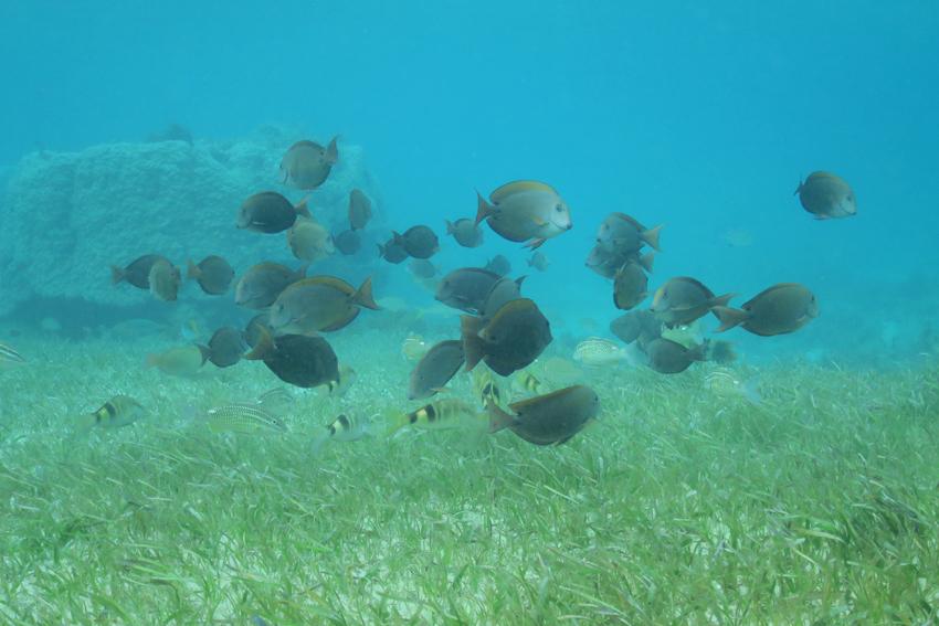 150129魚