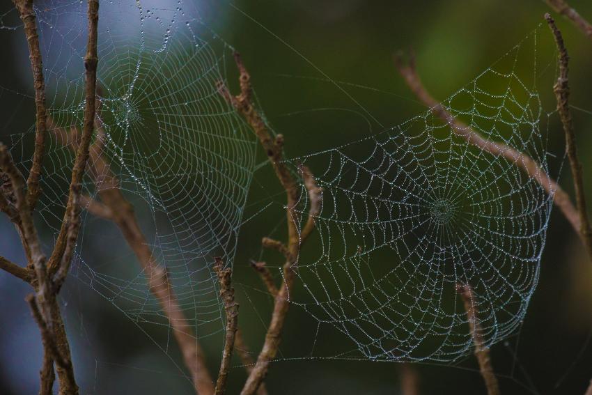 150402クモの巣1