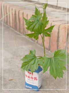 garden2015-70.jpg
