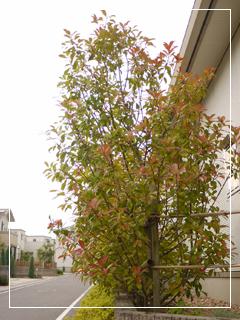 garden2015-78.jpg