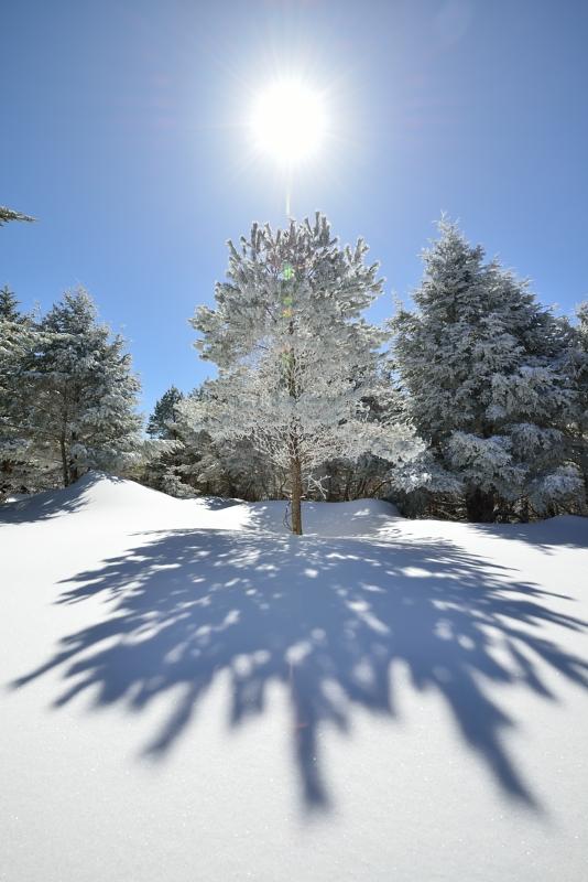 霧氷樹  (徳島県丸笹山)