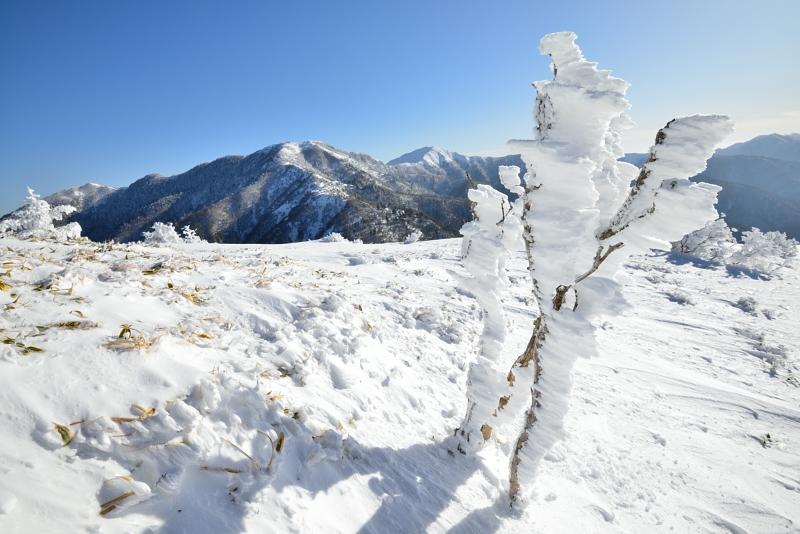 霧氷エビの尻尾  (徳島県丸笹山より剣山)