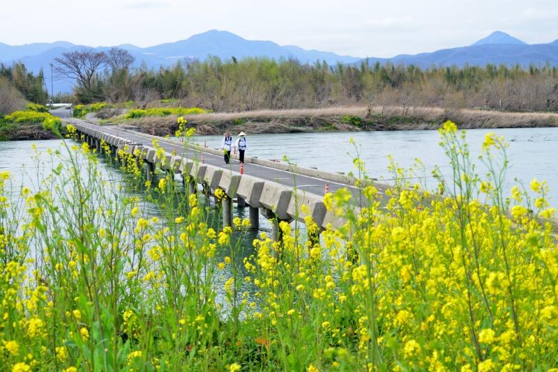 「春の沈下橋」  (徳島県吉野川市)
