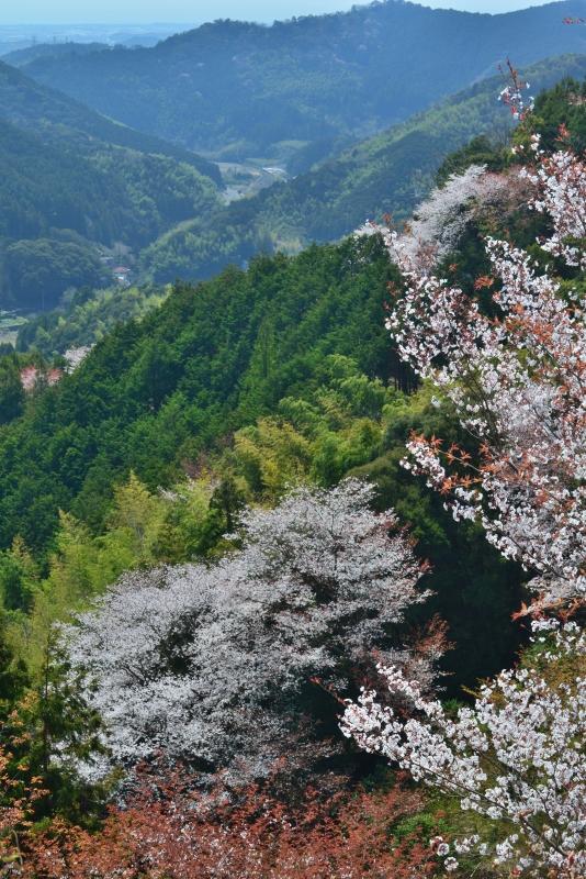 「山里の春2」   (高知県南国市)