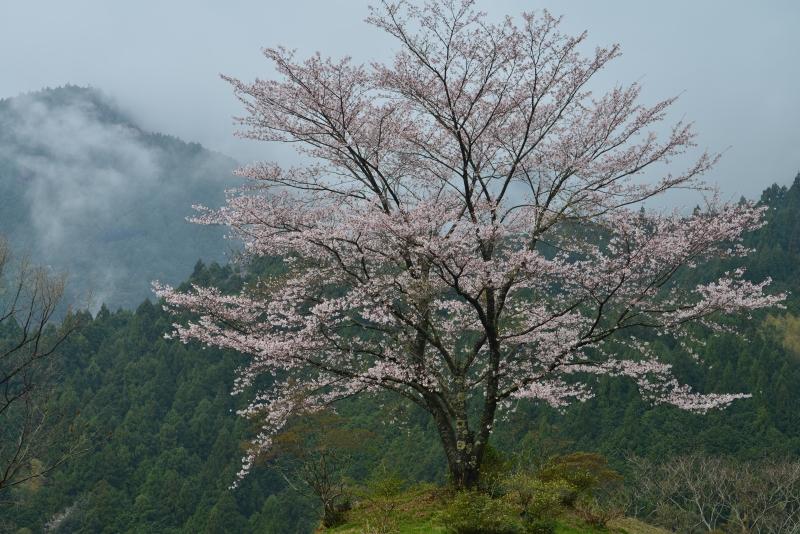 「霧晴れて」     (高知県香北町)