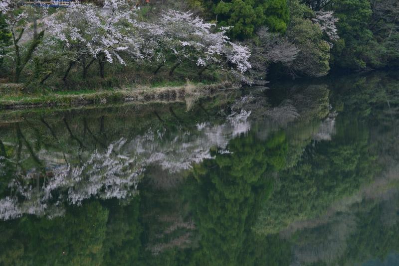 「物部川」に映えて」   (高知県香北町)