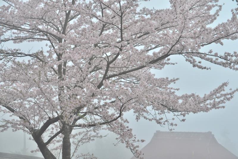 「霧の山里」   (徳島県つるぎ町)