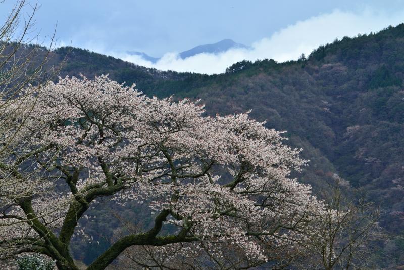 「山里に咲く」   (香川県まんのう町)