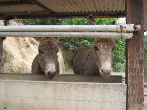 2015初夏☆渋川動物公園