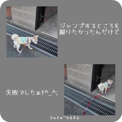 20150529-004.jpg