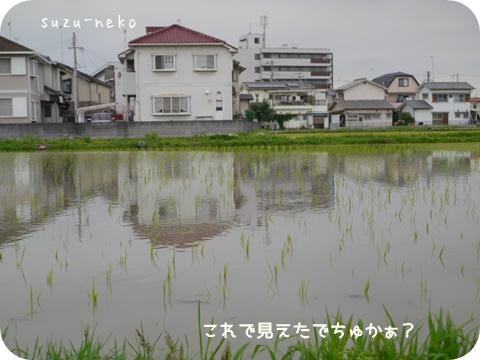20150614-004.jpg