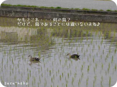 20150619-002.jpg