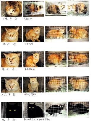 地域猫2img024a