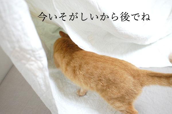 20150517_23.jpg