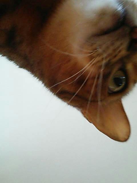 cat_1424571992391 (480x640)