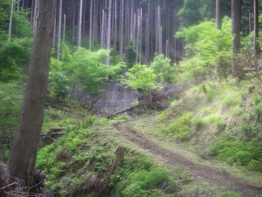 _ichishi40.jpg