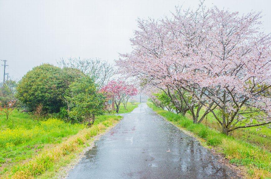 「春 雨 景色」の画像検索結果