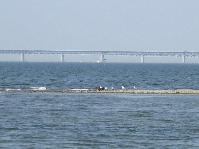 IMG_9077カモメと関空への橋