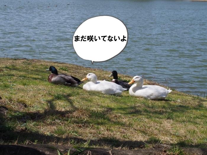 P3230007.jpg