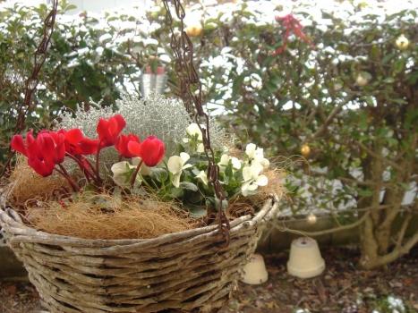 クリスマス用鉢