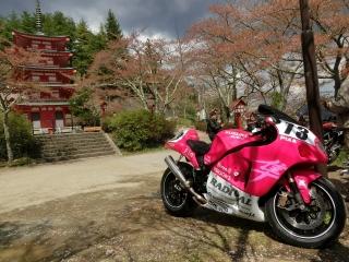五重塔とピンクちゃん