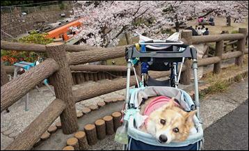 須磨浦公園1