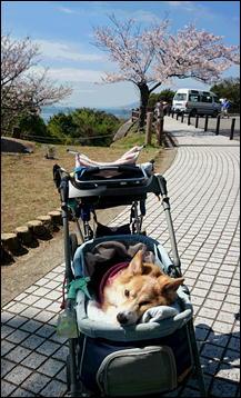 須磨浦公園2
