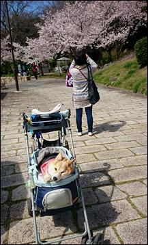 須磨浦公園3れこちゃんと