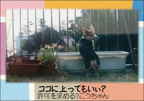 パピーこうちゃん3