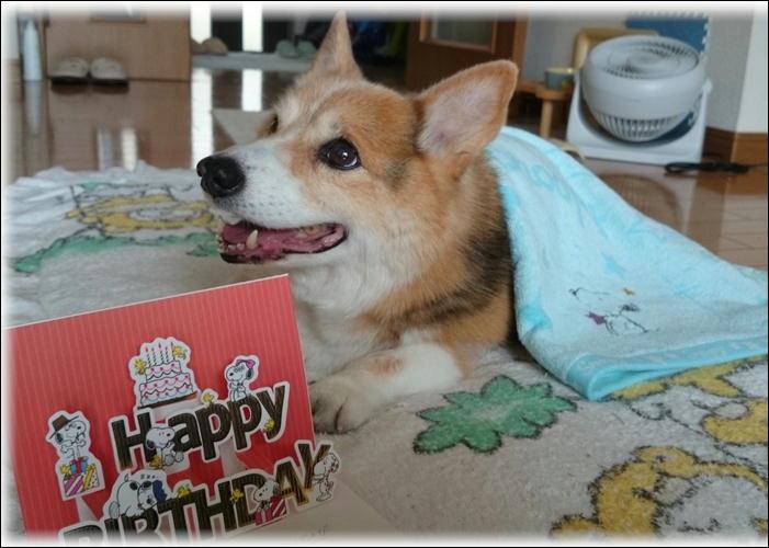 こうちゃん生誕記念日