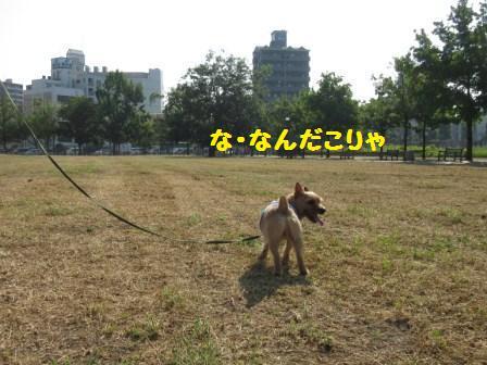 IMG_239915・8草刈り直後
