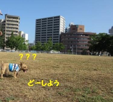 IMG_240015・8草刈り直後