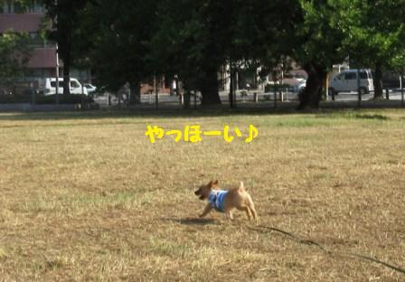 IMG_240415・8草刈り直後